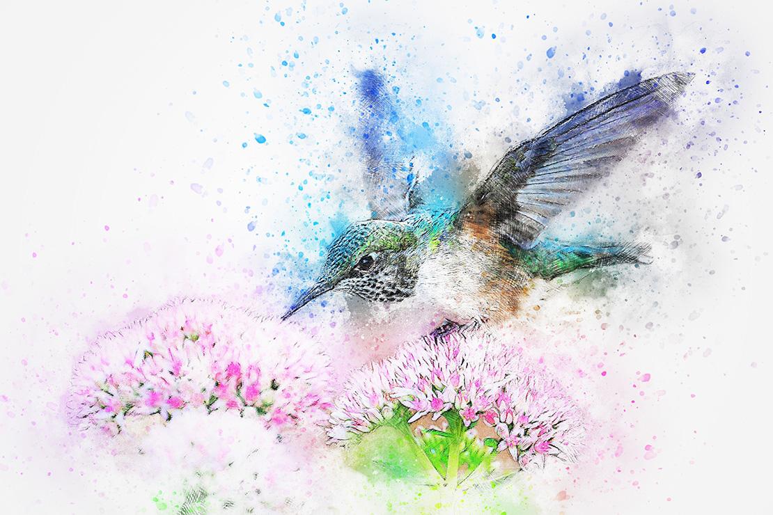Колибри и цветы