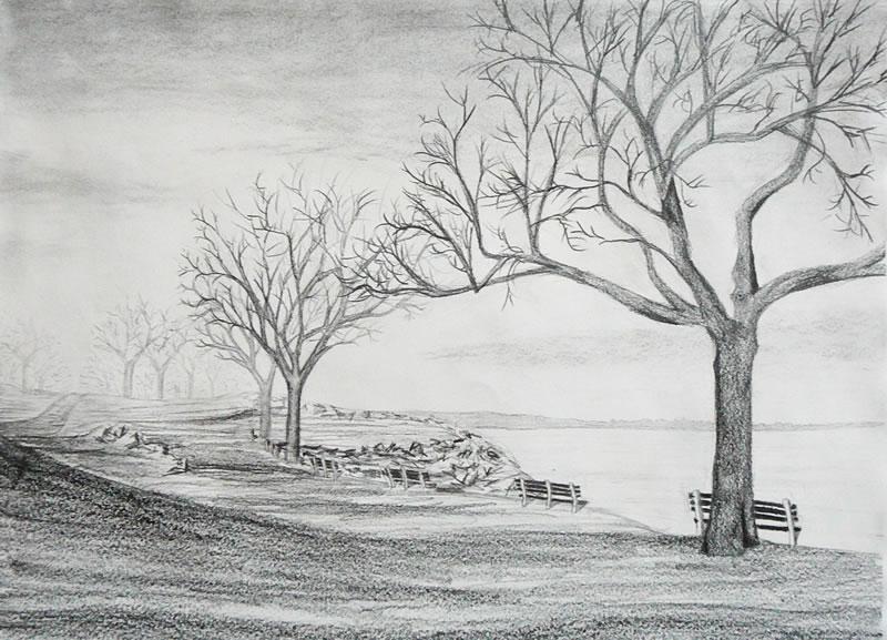 Деревья в перспективе, карандаш