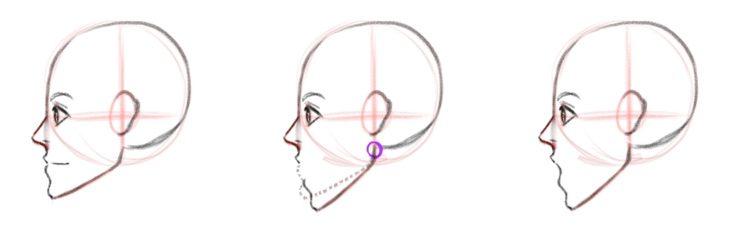 Губы и движение челюсти, вид сбоку