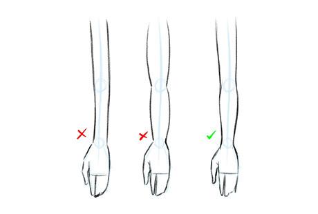 Пропорции руки