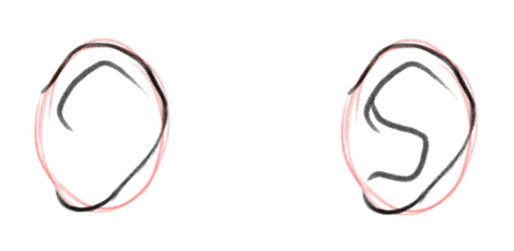 Внутренние линии уха