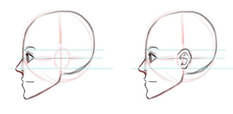 Уши на голове, вид в профиль